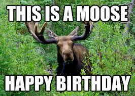 Moose Meme - this is a moose happy birthday birthday moose quickmeme