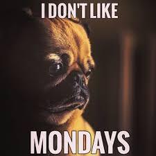 Sad Pug Meme - 50 funny pug memes best funny pug pictures