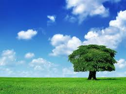 1568 tree hd wallpapers backgrounds wallpaper abyss