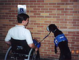 How Does A Guide Dog Help A Blind Person Service Animal Wikipedia