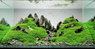 Aquascape Nj Amazing Simplistic Aquarium Aquariums