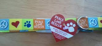 adopt a belgian sheepdog contact belgian sheepdog rescue trust