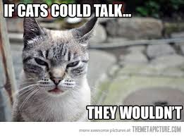 Cat Memes Tumblr - funny cat pictures with captions with guns with quotes without