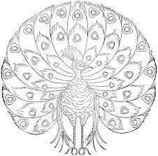 peacock coloring pages free to print coloringstar