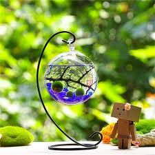 marimo aqua terrarium kit for home or office incredible things