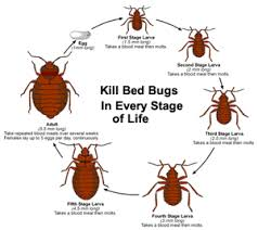 Treatment For Bed Bugs Bed Bugs Treatment New Jersey Eastern Bed Bug Control