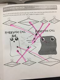 Cell Membrane Worksheet Prokaryotic And Eukaryotic Cells Diagram Diagram Collections