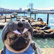 Depressed Pug Meme - 34 really depressing pictures and memes gallery ebaum s world