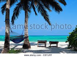 beach view palm trees hammock lush plants cottage stock photo