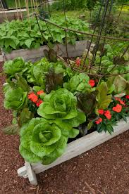 small home vegetable gardens u2013 home design and decorating
