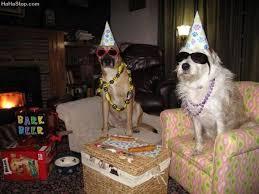 dog birthday party dog birthday party jpg