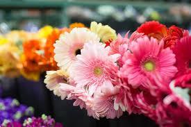 arizona flowers arizona flower market 96 photos 56 reviews wholesale stores