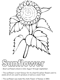 flower printable coloring sheets sunflower coloring