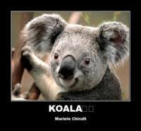 Koala Meme Generator - koala meme generator 28 images cant believe it koala weknowmemes