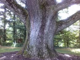 oak base on tk tree jpg 1280 960 phantasmagoria