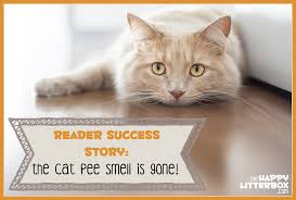 reader success story the cat smell is gone