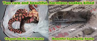 How To Avoid Snakes In Backyard How Do You Kill A Snake