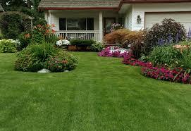 seed or sod when establishing a new lawn scienturfic sod