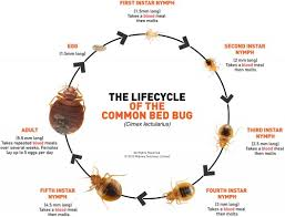 Bed Bugs What To Do What To Do If You Have Bed Bugs California Apartments Blog