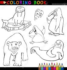 walrus stock photos u0026 pictures royalty free walrus images and