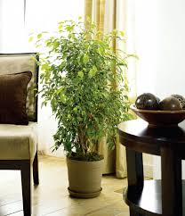 bring the outdoors in decorate with houseplants garden club