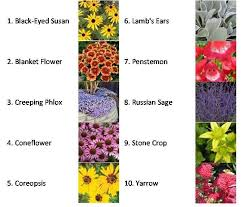 10 Perennials That Thrive In by Best 25 Phlox Flowers Ideas On Pinterest Creeping Phlox