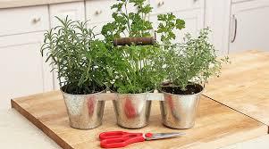 herbs indoors how to grow herbs indoors over the winter season