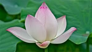 eugene hőn ceramic artist featuring the beautiful lotus flower