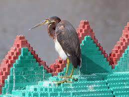 heron meaning common walt disney world wild birds