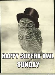 Superb Owl Meme - happy superb owl sunday meme on imgur