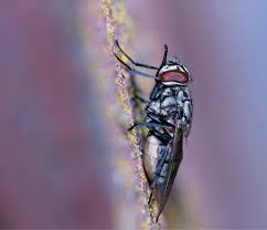 Small Flies In Bathroom Sink Down The Drain Pct Pest Control Technology