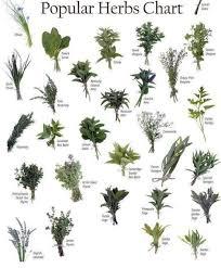 herb chart herb chart tumblr