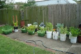 container vegetable gardening designing your container vegetable