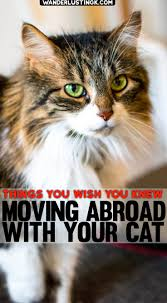 Kentucky traveling with cats images Tips for traveling overseas with a cat moving abroad with a cat jpg