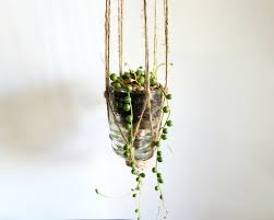 Hanging Plant Glass Insulator Hanging Plant By Terra Velta At Maker House Co