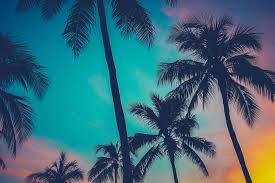 hawaii palms mural wallpaper muralswallpaper co uk