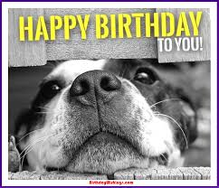 Meme Birthday Card - meme birthday card beautiful doge birthday card choice image free