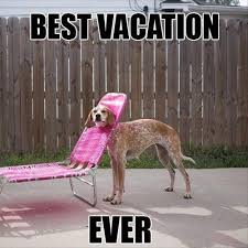 Meme Vacation - sarcastic dog hates vacation i has a hotdog dog pictures funny