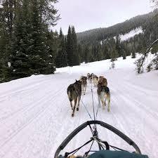 Jackson Hole Iditarod Sled Dog Tours 2018 All You Need to Know