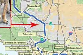 Grapevine Map Grapevine Route Ditched Bullet Train Will Hit Palmdale Curbed La