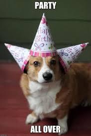 Corgi Birthday Meme - top 100 original and funny happy birthday memes birthdays