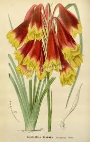 the most poisonous plants in australia hipages com au 22 best native australian flower garden images on pinterest