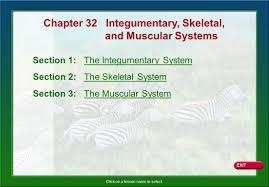 chapter 32 integumentary skeletal ppt download