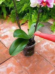 Plants That Don T Need Water How Not To Kill Your Orchid Hgtv