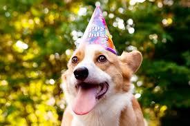 dog birthday party corgi birthday party pupcake recipe brownie bites