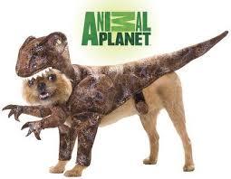 Funny Halloween Animal Costumes 42 Howl Ween Images Animals Happy Halloween