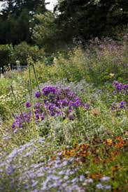 new york native plants 47 best plant menu my south facing hillside images on pinterest