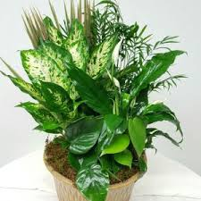 sympathy plants sympathy plants judy s flowers