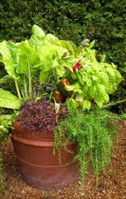 Vegetable Container Garden - top 10 vegetables for containers