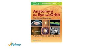Anatomy Of The Eye Anatomy Of The Eye And Orbit The Clinical Essentials